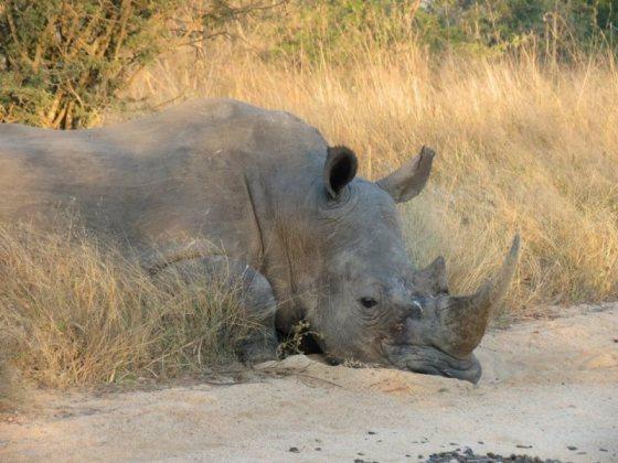 Rhino Sunrise.